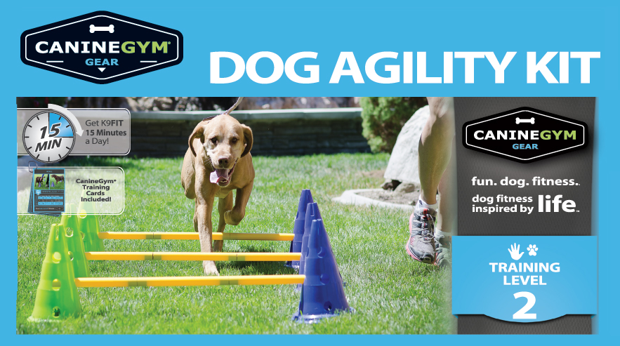 Dog Agility Training Age
