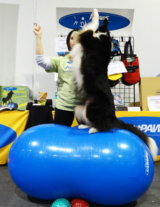 FitPAWS® Peanut High Five