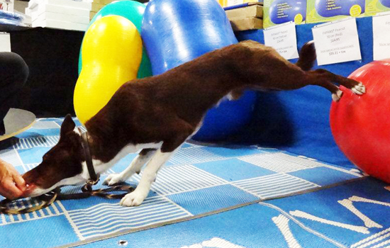 FitPAWS® Peanut Back Feet On Ball