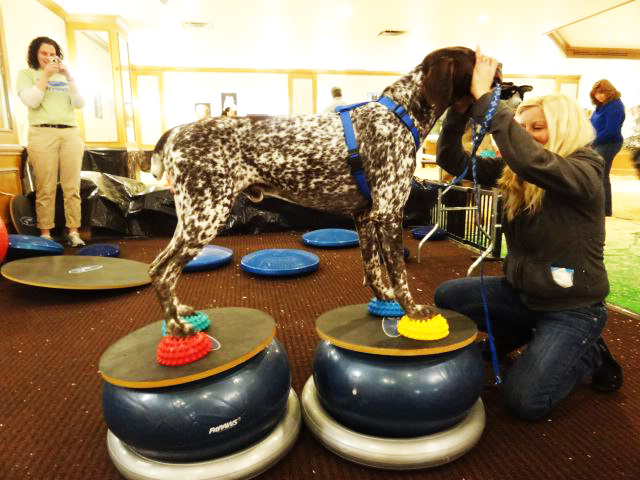 Extreme Stacking Training | FitPAWS® Canine Conditioning Equipment