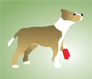 FitPAWS® Canine Conditioning Equipment Helps Prevent Injuries