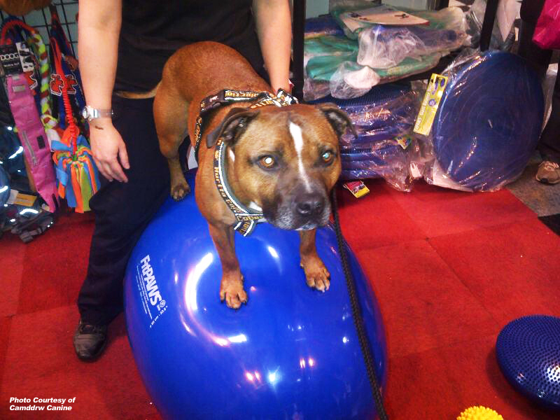 The FitPAWS® Egg For Greater Balance Challenge!