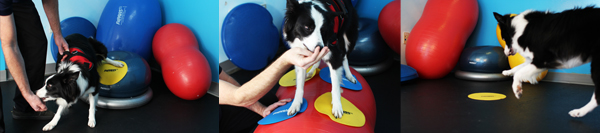 FitPAWS® Targets Are Great Tools for Dog Exercise!