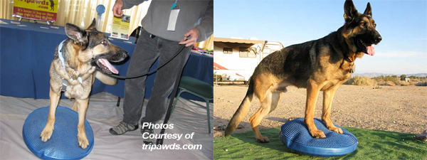 "Try ""Sits"" and ""Downs"" on the FitPAWS® Giant Balance Disc 