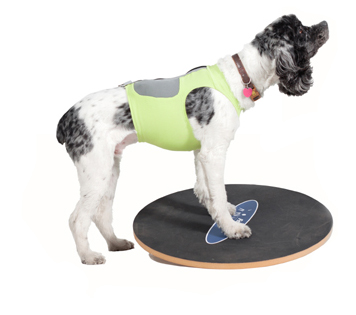 Big News in Dog Exercise! DogTread® and FitPAWS® in Joint Venture!