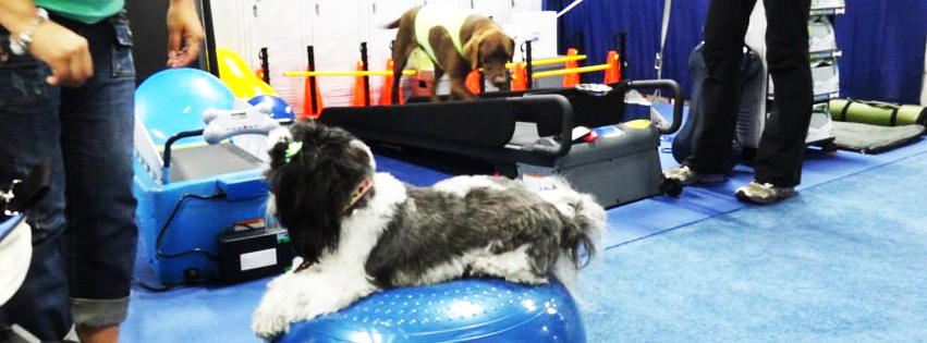 Have Fun Burning Fat With FitPAWS® and DogTread®