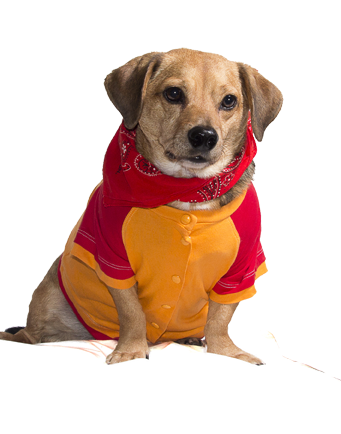 Obese Dogs Are In Danger of Metabolic Syndrome | FitPAWS® Canine Conditioning Equipment