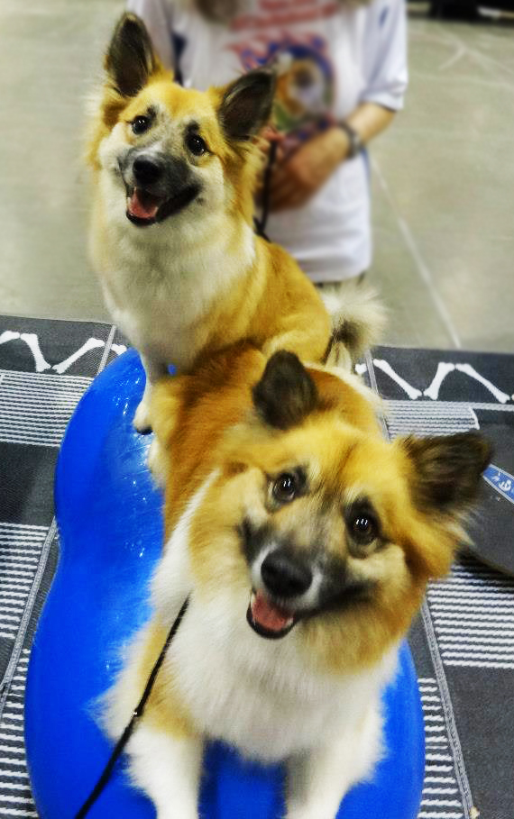60dogs-love-fitpaws-equipment