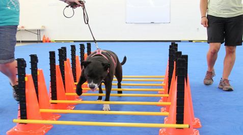 FitPAWS® Hurdle Set for Dog Show Training