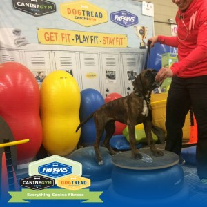 FitPAWS DogTread Canine Gym