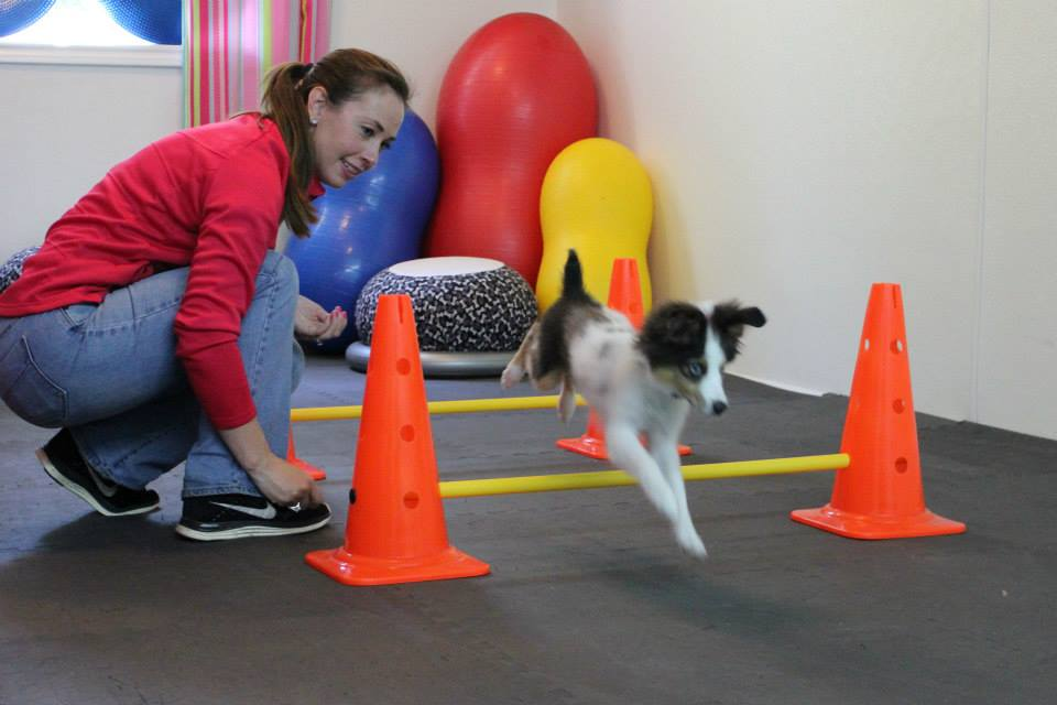 0-miss-daisys-dog-camp-brody-fitpaws-class
