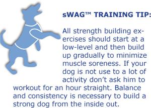 K9FITvest Workout SwagTip-high-five