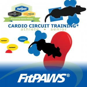 140627-fitdog-friday-cardio-circuit-training-fitpaws-caninegym1-300x300