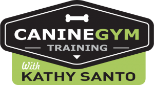 CanineGym-Training_transp-300x166