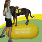 The FitPAWS Peanut is the best for dog exercise and canine core strength.