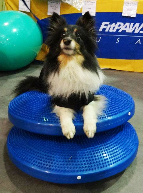 Double Disc Down | FitPAWS® Balance Disc
