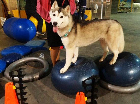 Stand No Front Holder | FitPAWS® Donut