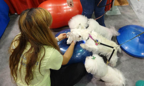Introduce Your Dog To The Ball   FitPAWS® Canine Conditioning Equipment