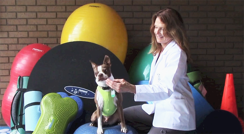 FitPAWS Canine Rehabilitation Packages