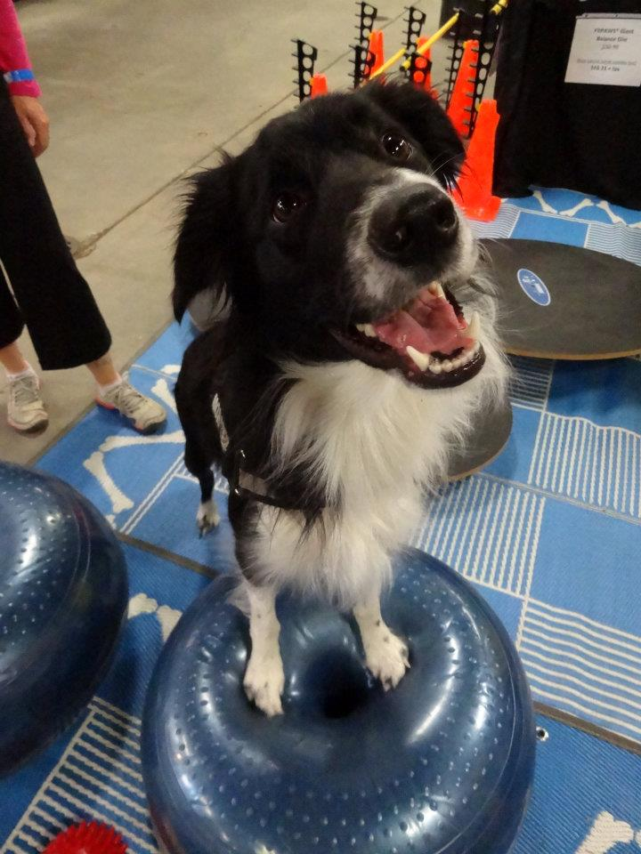 FitPAWS FAQ and HELP page - HAppy Dog on FitPAWS Donut