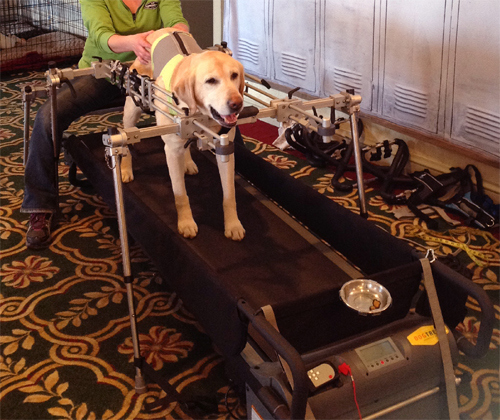 DogTread_Therapy-Stand