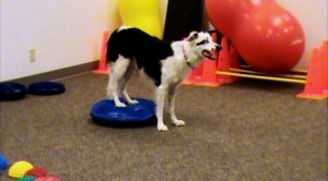 FitPAWS FUNdMENTALS is a class full of fun exercises