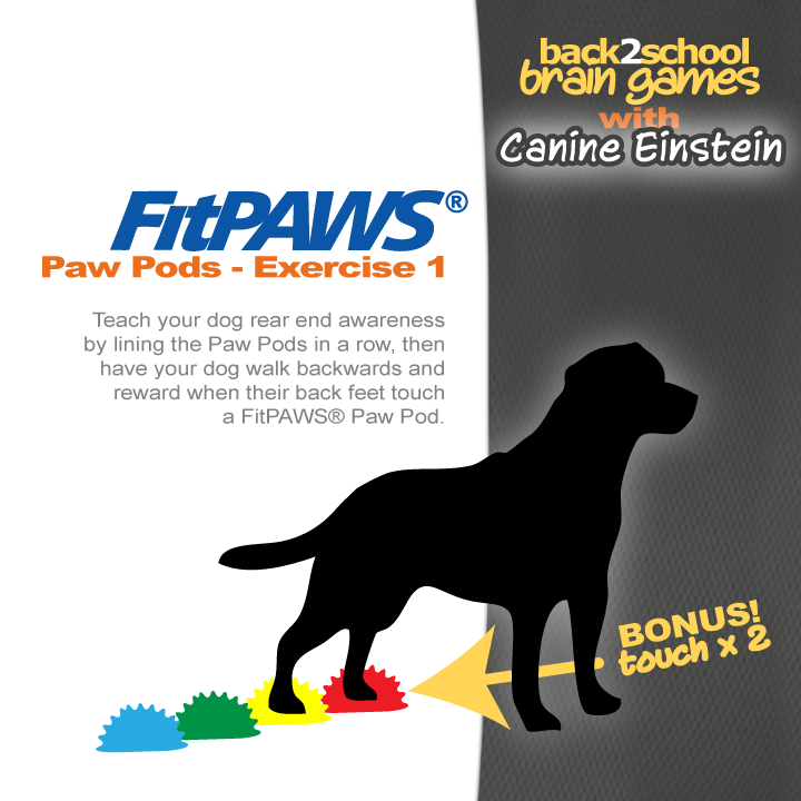 1408BRGM-fipaws-paw-pods-brain-games-exercise-11