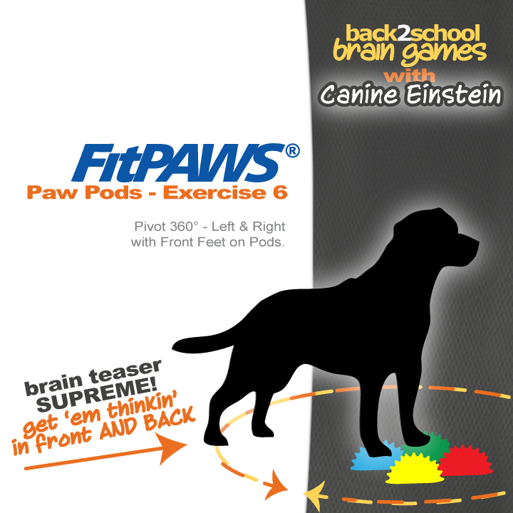 FitPAWS PAW POD Canine Brain Games