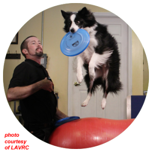 FitPAWS® for Disc Dog Fitness Training