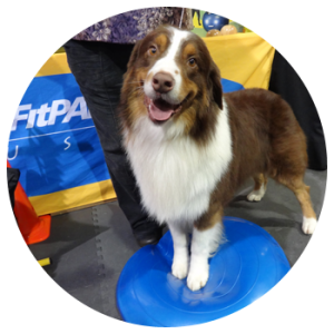 FitPAWS® for Triebball & Herding Canine Fitness Training