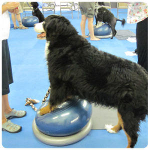 FitPAWS® for Obedience Training