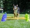 CanineGym Gear Agility_Kit_Action2