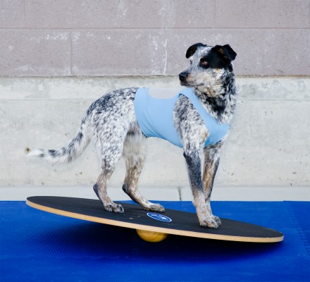 FitPAWS Dog Wobble Boards