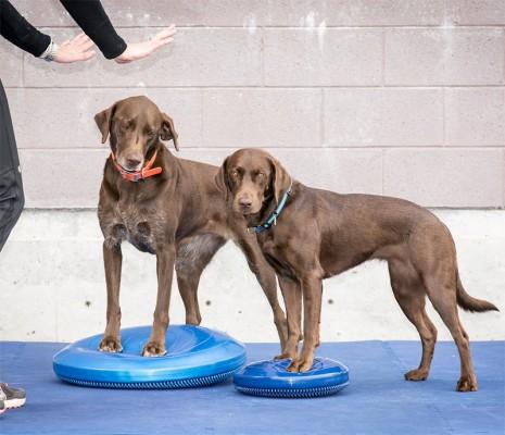 FitPAWS Dog Balance Disks