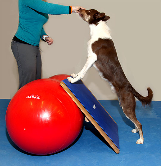 Giant BalanceBoard with the FitPAWS Peanut