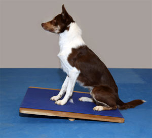 FitPAWS Giant Balance Board_sit