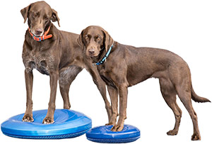 FitPAWS Balance-Disks