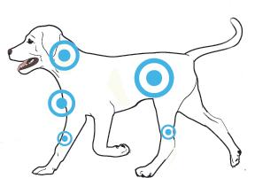 Agility_TargetAreas-DOG