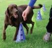 Dog Agility_Weave Exercise
