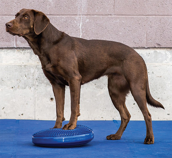 FitPAWS Balance Disk for Dogs
