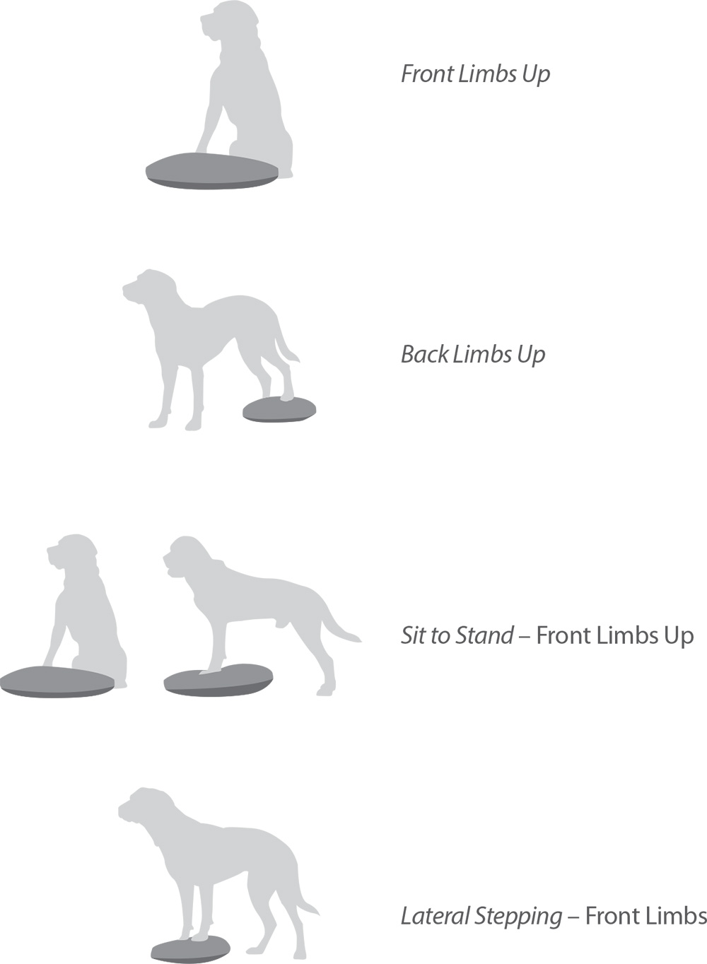 Exercises-Balance-Disk