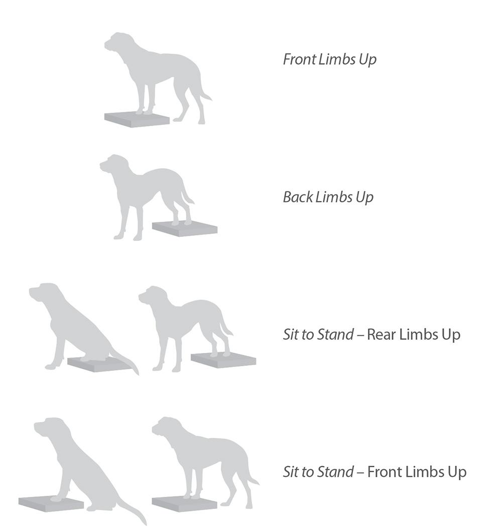 Exercises-Balance-Pad