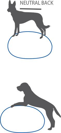 FitPAWS_Egg_Illustration
