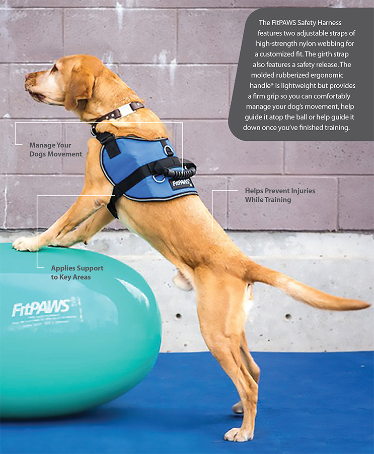 FitPAWS_Safety-Harness-Points