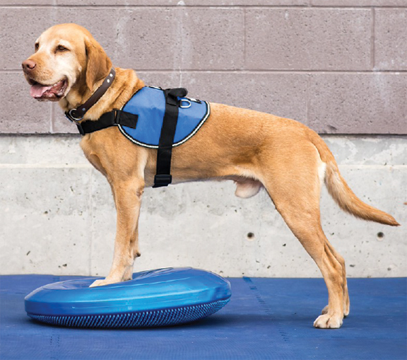 Disk Training For Dogs