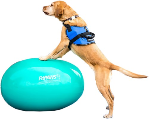 FitPAWS safety Harness - with FitPAWS Balance Egg