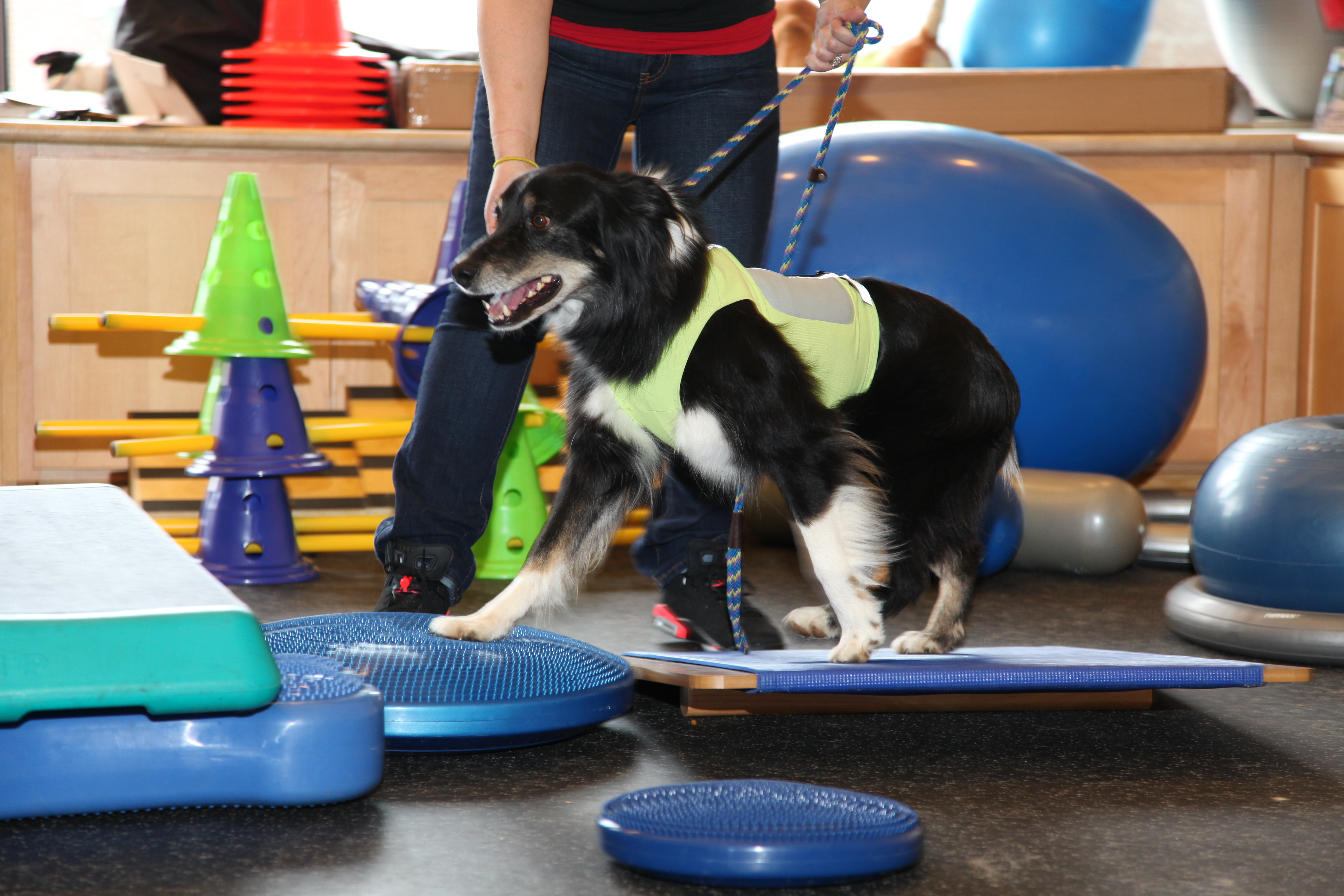 Canine physical therapy - Why Our Program