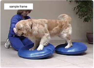 Pilates for Pooches (DVD) - Dog Fitness Video