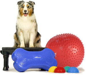 Canine-Gym-in-a-box-TRAX-web