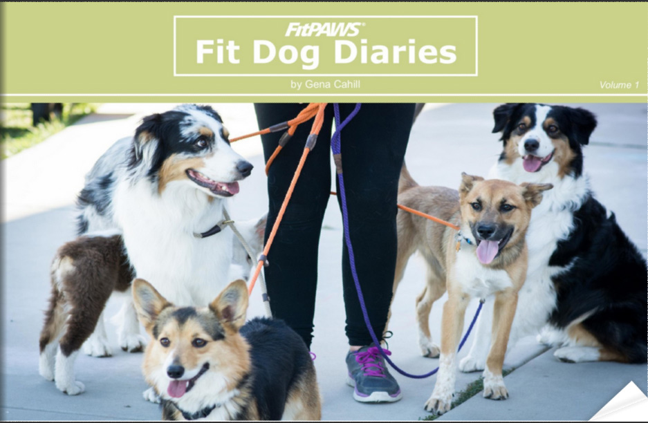 FitDog-Diaries-Vol1-COVER